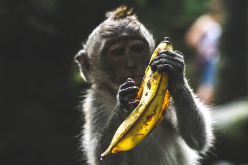monkey bananas